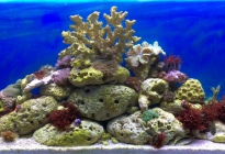 Mořští živočichové a korálnatci