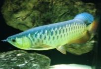 Ryby do akvárií a paludárií